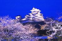兵庫県 桜のライトアップの姫路城