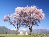長野県 安曇野市 桜と道祖神