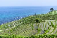 石川県 輪島の千枚田