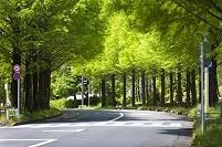 東京都 並木道