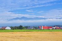 北海道 農場と日高連山