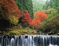 京都府 貴船川と北山杉