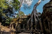 カンボジア タ・プローム