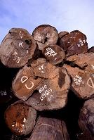 輸入木材ストックヤード