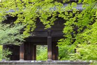 京都府 京都市 新緑の南禅寺三門