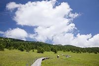 長野県 湯の丸高原 池の平湿原