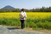 愛媛県 大洲菜の花と遍路