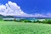 沖縄県 サトウキビ畑と川平湾
