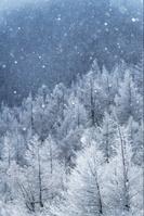 長野県 霧氷の林とダイヤモンドダスト