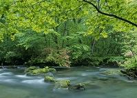 奥入瀬渓流、三乱の流れとツツジ