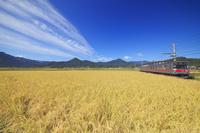 長野県 上田市 別所線の電車と稲穂実る田園と秋空と夫神岳