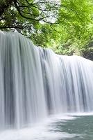 熊本県 滝と緑