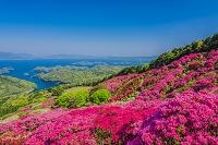 長崎県 ツツジ咲く長串山より北九十九島
