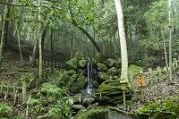 京都府 出雲大神宮御陰の滝