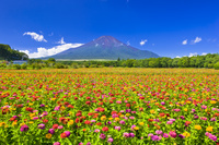 日本 山梨県 富士山と花の都公園
