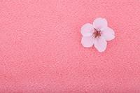 桜の花と紫の縮緬