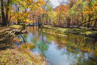 栃木県 奥日光 仙人庵の川と紅葉する林