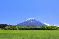 山梨県 残雪の富士山と新緑の高原