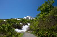 残雪と新緑の鳥海山