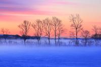 北海道 朝焼けと霧