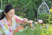バラの手入れをする日本人女性