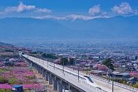 山梨県 花咲く桃畑を走るリニア新幹線と北岳