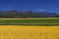 長野県 実りの稲穂と八ヶ岳連峰
