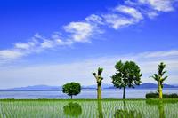 滋賀県 大津市 水田と琵琶湖