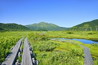 群馬県 中田代の池塘と至仏山