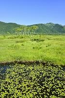 群馬県 中田代の池塘と白樺