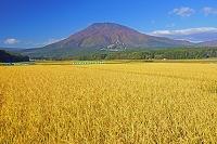 長野県 稲田と黒姫山