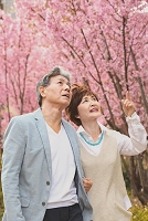 花を見る日本人のシニア夫婦