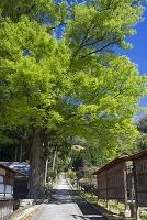 滋賀県 奥琵琶湖 菅浦