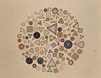 珪藻 顕微鏡写真