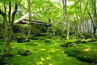 京都府 祇王寺 苔の絨毯