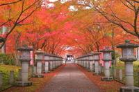 兵庫県 紅葉の丹波高山寺