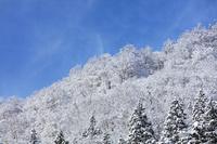富山県 着雪した山