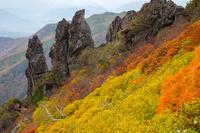 北海道 大雪山 黒岳九合目まねき岩の紅葉