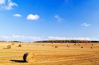 北海道 ロールのある収穫後の豆畑