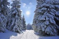 ドイツ テューリンゲン 雪道と木々