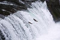 北海道 さくらの滝