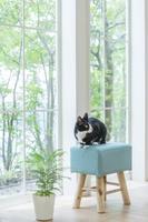 椅子に伏せて振り向く猫