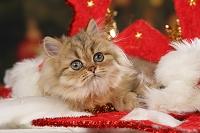 クリスマス装飾の上で横たわるペルシャ猫