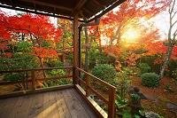 京都 大法院の紅葉
