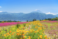 山梨県 中野の棚田と富士山