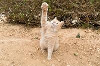 マルタ島の猫