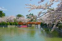 三重県 春の九華公園