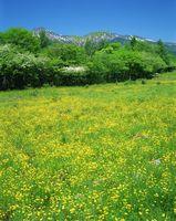 長野県・南牧村 八ヶ岳牧場