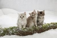 雪景色の中の子猫