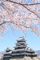 長野県 松本城 天守閣と桜